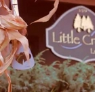 Why Little Creek?