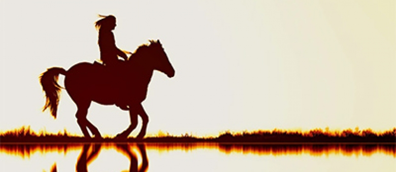 From The Power of Horses to Heal