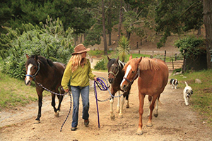 equine therapy at stables