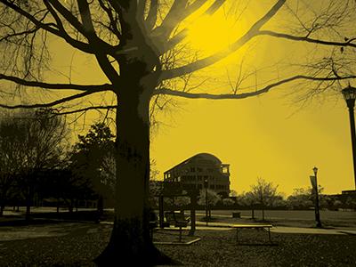 DSCN0138 (1)yellow
